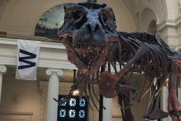 SUE the T Rex at the Field Museum in Chicago